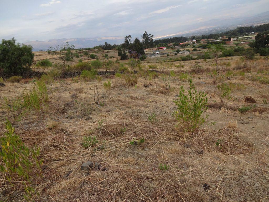 Parcela agroforestal dinámica con aplicación de biocarbón en el valle central de Cochabamba