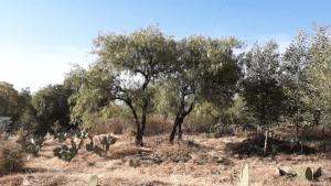 Un breve recorrido por Mollesnejta (Vídeo)